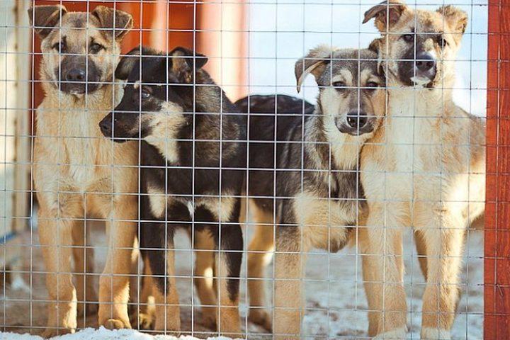 Собаки в приюте для животных