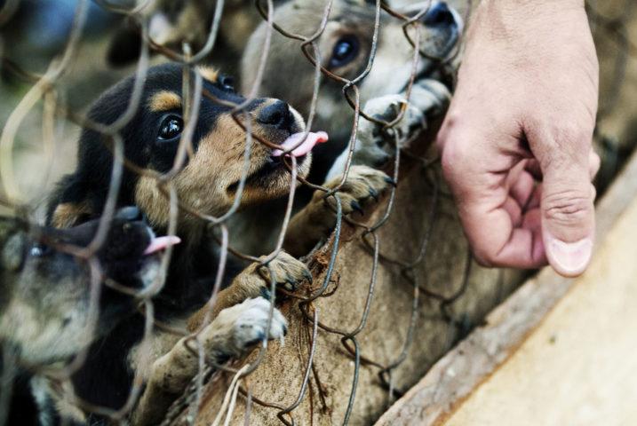 Собаки смотрят через сетку