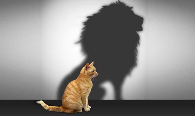 Кот и тень льва