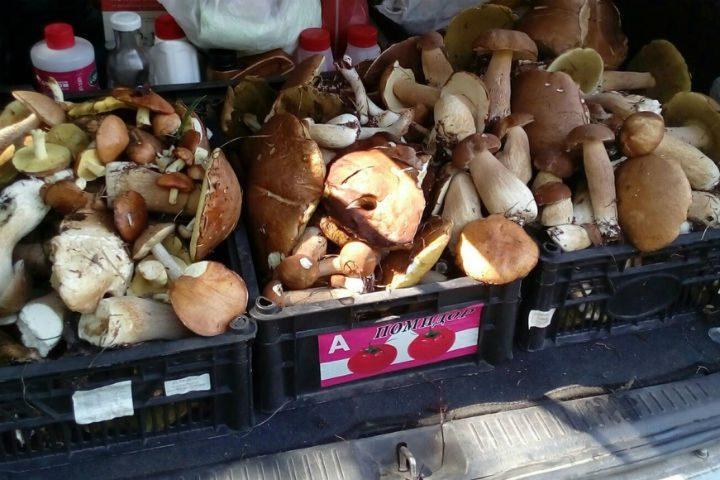 Несколько ящиков с грибами