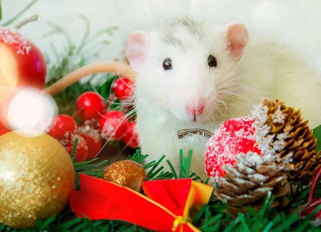 Год Крысы обещает быть насыщенным приятными и неожиданными событиями