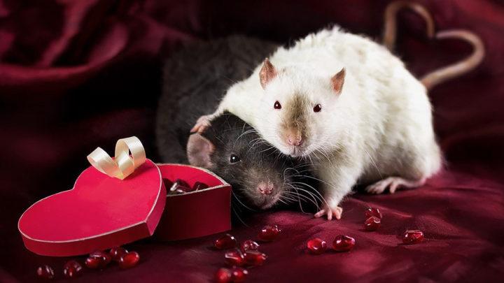 Опасные подарки, которые нельзя дарить и принимать в год Крысы