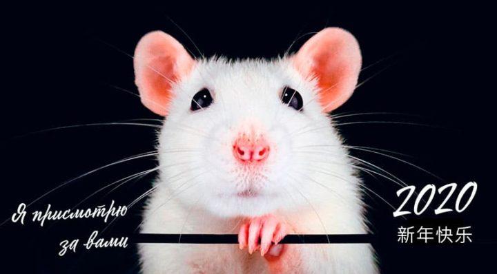 Для чего благоприятен год Крысы