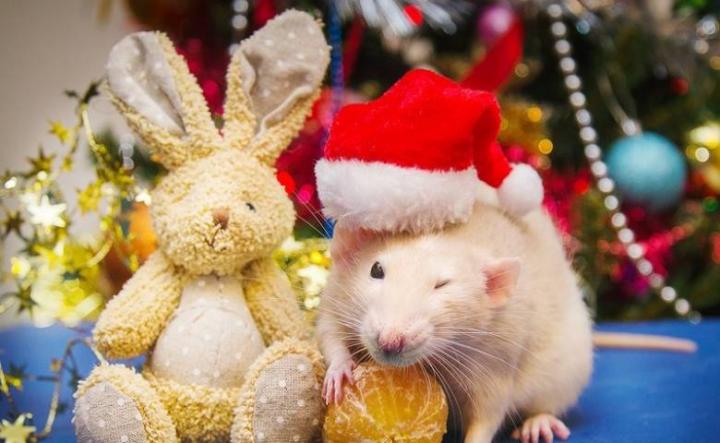 Как правильно встретить год Крысы