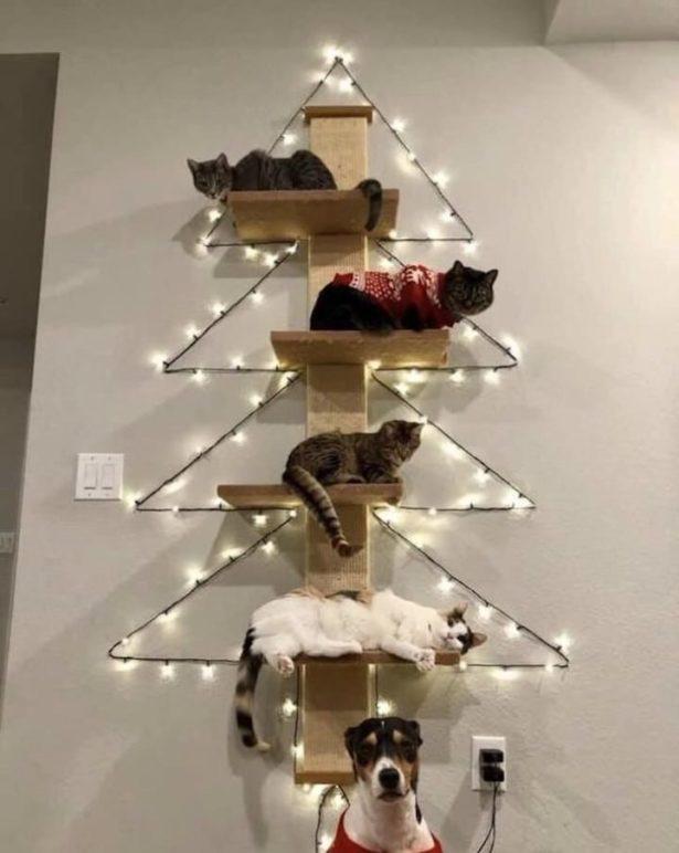 Елка для кошек