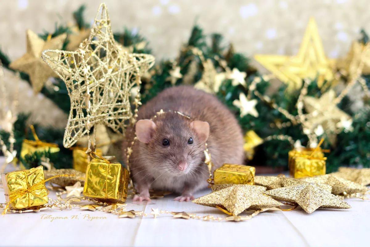 Китайский гороскоп наделяет Крысу способностью извлекать выгоду из любой ситуации