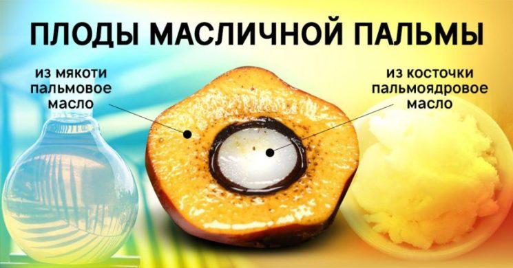 Виды масла из пальм