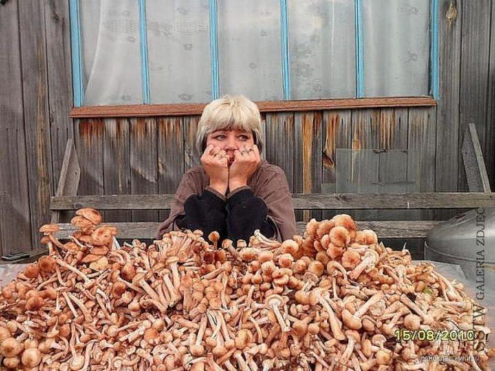 Нельзя собирать грибы в високосный год