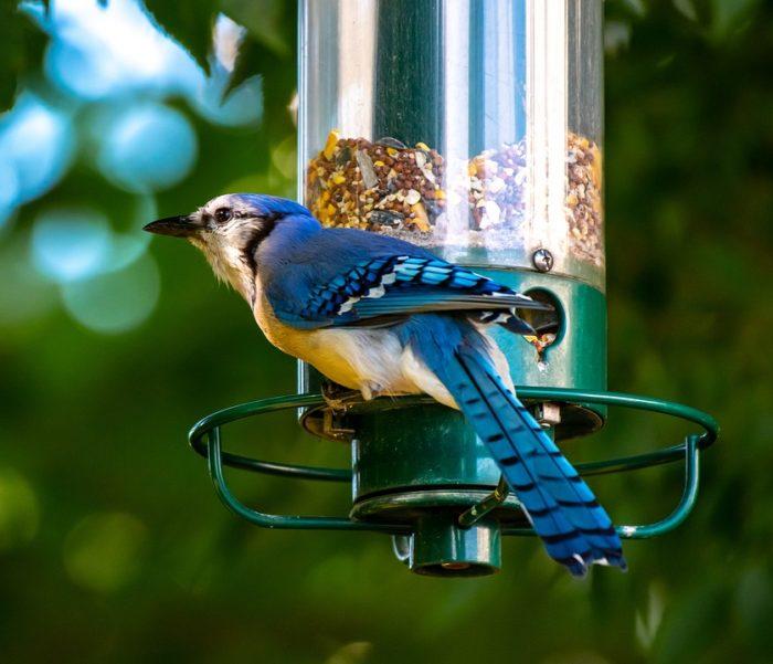 Подкармливать оставшимися продуктами птиц иживотных
