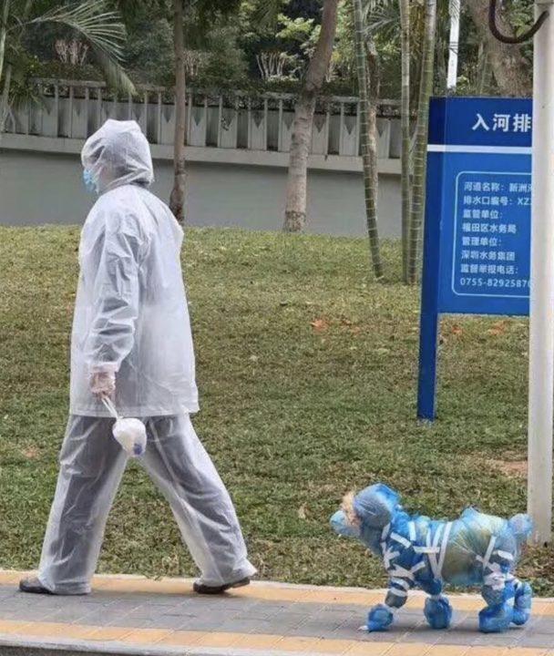 Человек и собака в целофановой одежке