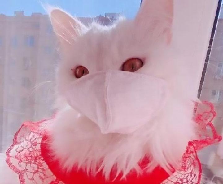 Кошка в маске и в кружевных рюшах