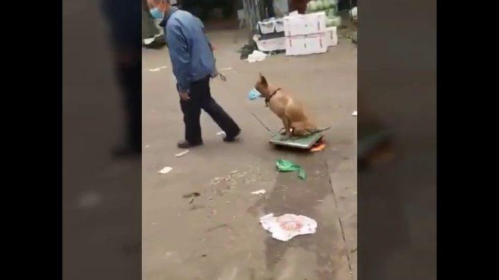 Собачка с хозяином в маске