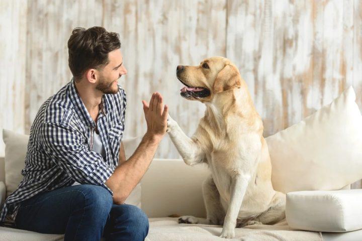 Пес и человек