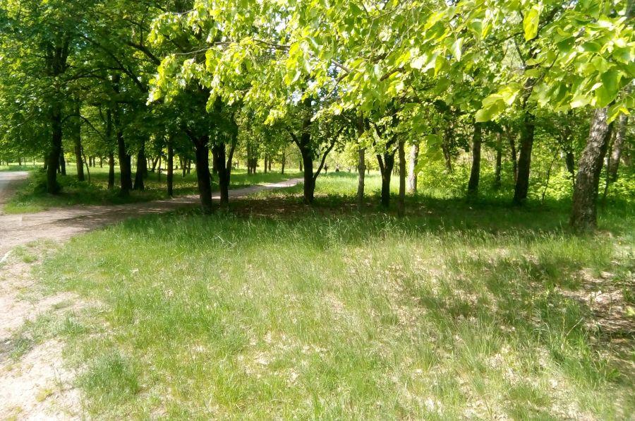 Лесная поляна в Вильнюсе
