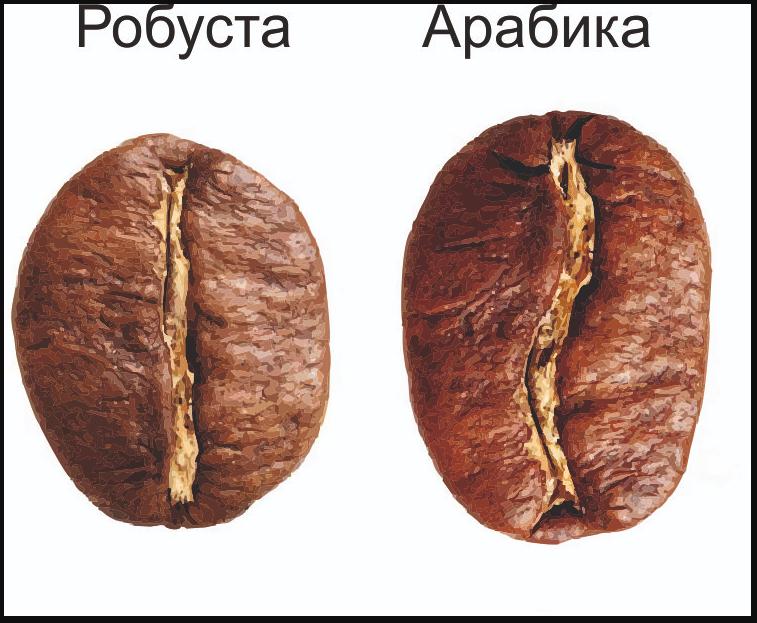 Зерно арабики и робусты