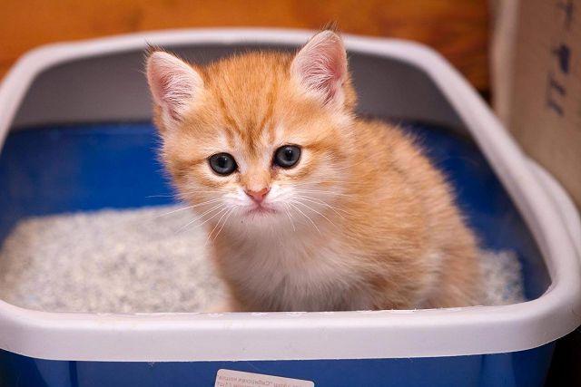 Рыжий котенок в лотке