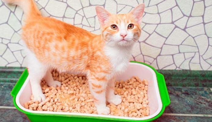 Рыжий кот в лотке с наполнителем