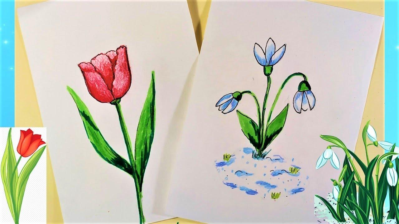 Срисовка тюльпана и подснежников карандашом и ручкой
