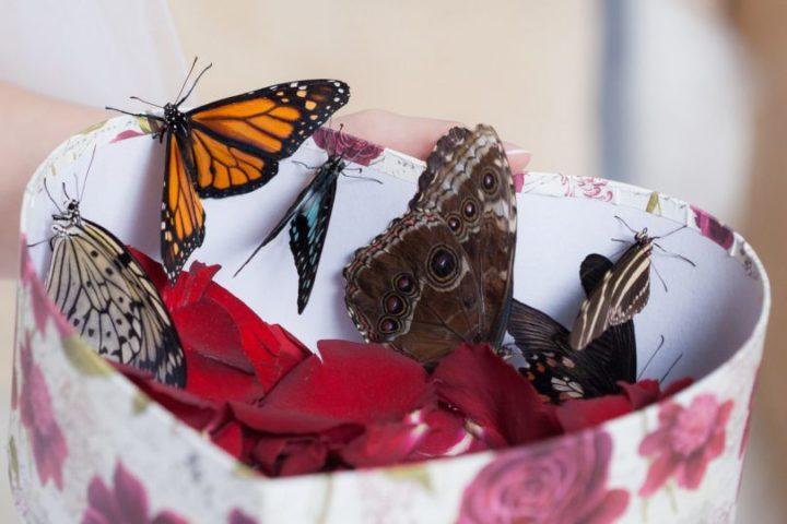 Бабочки в коробке