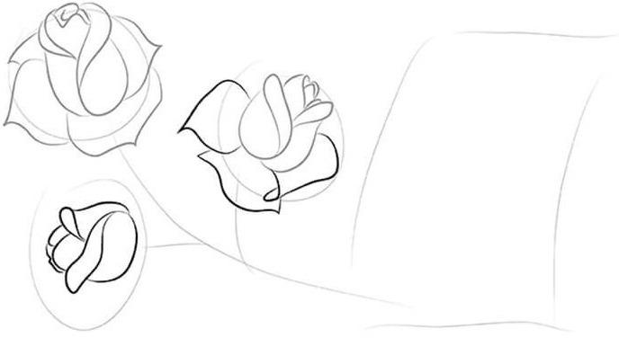 Пошаговое рисование роз
