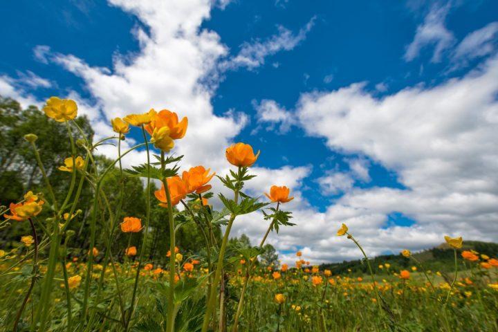 Полевые цветы на фоне синего неба с облаками